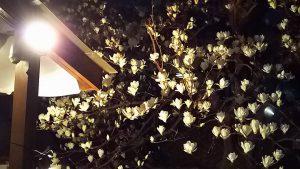 シンボルツリーの木蓮が満開!